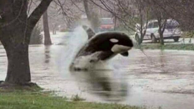 Shamu swims through flooded streets in Florida. Just kidding! This meme made the rounds -- again -- poking fun at the 10 days of nonstop in Florida. Dave Davinci, of Port St. Lucie, posted this image to his Facebook page Monday night.