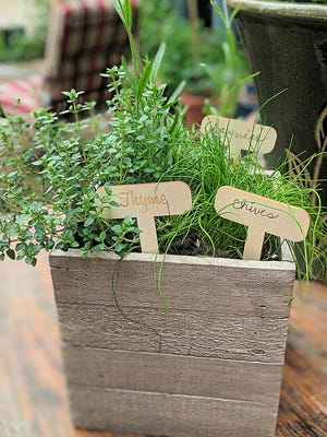 Chives, thyme and lavender are popular herbs in a French herb garden.