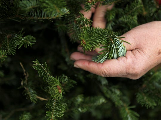 City offers to recycle some Christmas trees