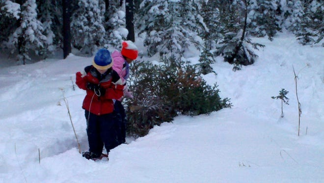 Gabe Cunningham and Kiahlee Trottier, both 8 in this photo, drag a Christmas tree back to the car after cutting it on the Lewis and Clark National Forest.