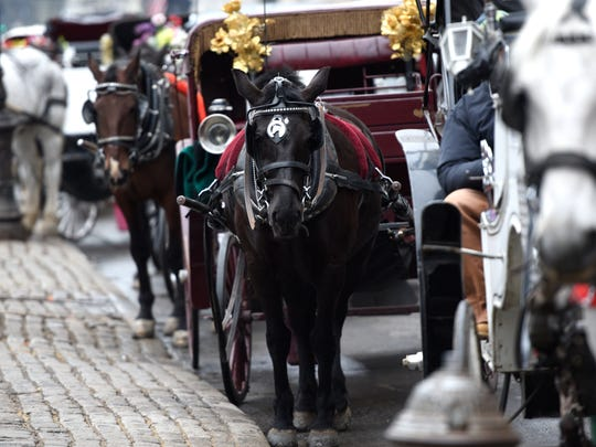 Carriage horses have been at work in the city since the 1880s.