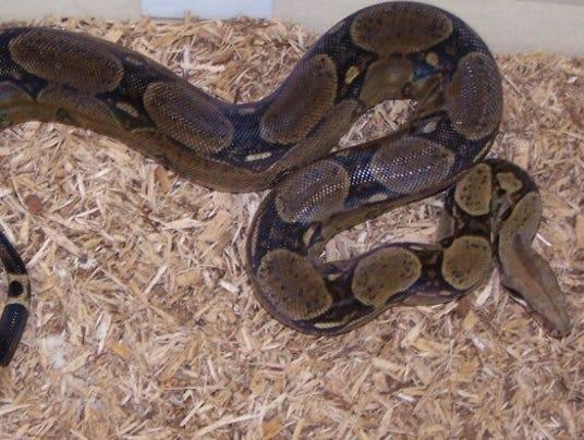 Snake_Final