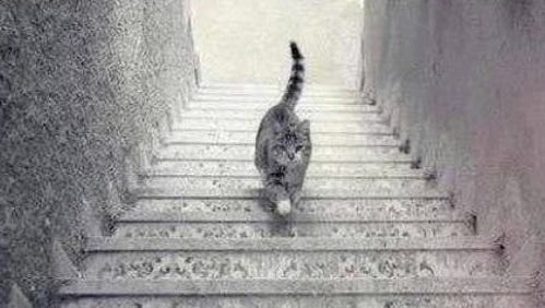 People are debating whether this cat is going up or down the stairs.