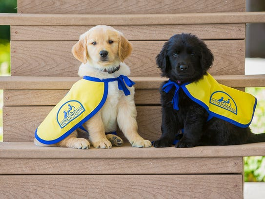 Canine Companions uses volunteers to help train puppies.