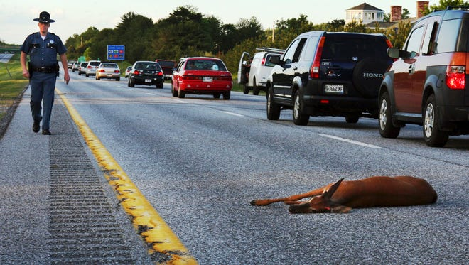 In this June 11, 2008, file photo, a wounded deer lies in the road after being hit by a car on the northbound lane of Interstate 295 near Freeport, Maine. In Oregon, under a road kill bill passed overwhelmingly by the Legislature and signed by the governor, motorists who crash into the animals can now harvest the meat for human consumption.