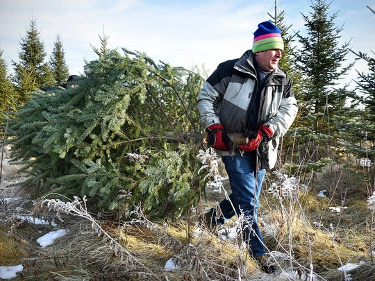 Joel Bartos hauls a freshly-cut tree in December 2015 to a trailer for the Hope Community Support Program's Christmas tree sale. The annual event rises funds for the Catholic Charities program.