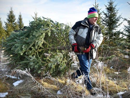 Joel Bartos hauls a freshly-cut tree in December 2015
