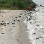 5 places to find nature at Delaware's beaches