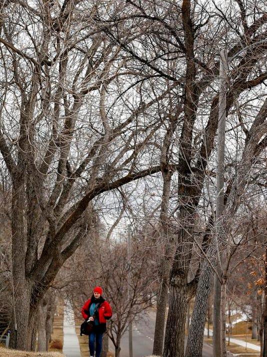 -Diseased Trees.jpg_20140221.jpg