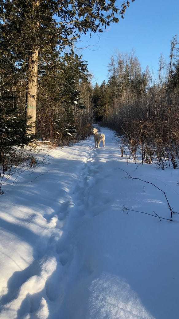 It is 10 below zero on the Ice Age Trail, and Henry