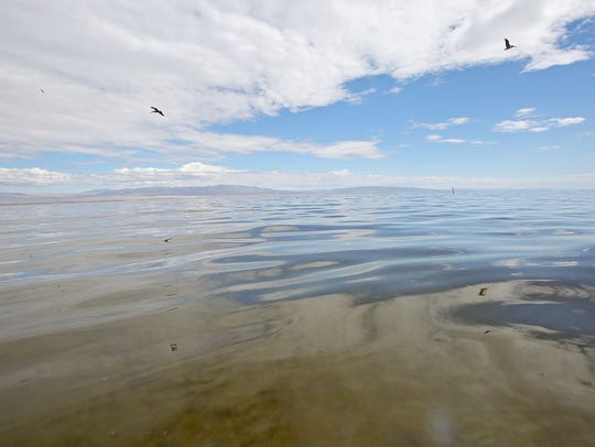 Birds fly over the Salton Sea, near the shoreline.
