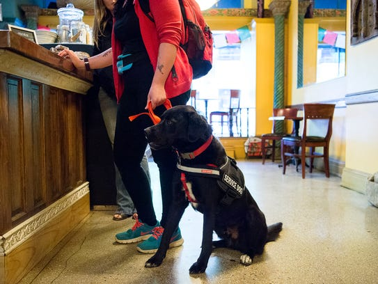 Baringer the service dog waits while his owner orders