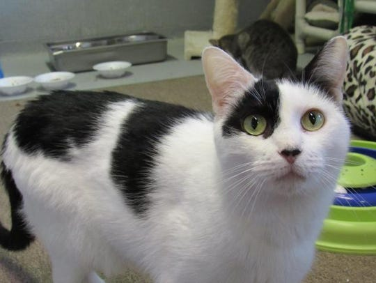 Friendly and outgoing Pax would love a home of her