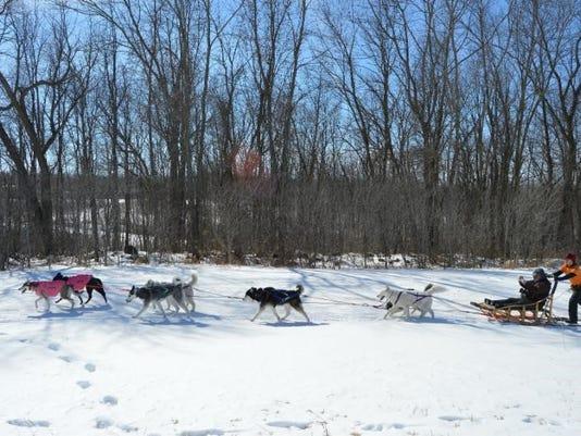 636201565740323063-dog-sled.jpg