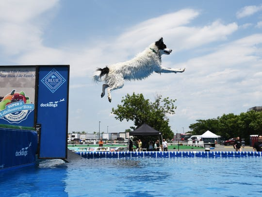 The World Dog Expo in Secaucus on Saturday June 10,