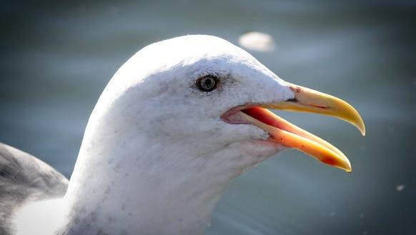 Now that's a close-up! A bird at 6aKamera RX10IV baru Sony melakukan hal-hal yang tidak dapat dilakukan iPhone00mm.