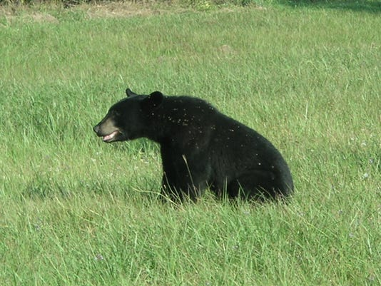 bear_2_5283915_ver1.0_640_480.jpg