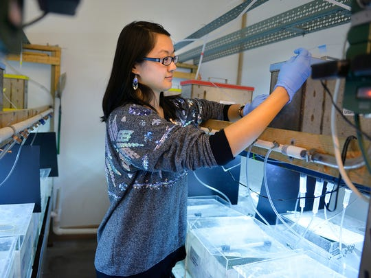Lina Wang, first-year graduate student, checks the rate of flow of a solution into a tank inside the aquatic toxicology lab Monday, Nov. 23, at St. Cloud State University. An ongoing study is monitoring the effects of pharmaceuticals and common chemicals in varying concentrations on populations of fathead minnows.