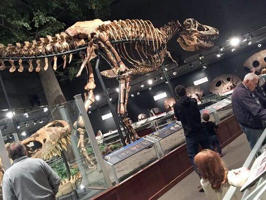 T-Rex looms over visitors at the Museum of the Rockies, Bozeman, Mt.