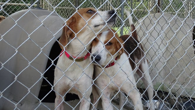 """These two dogs, along with 20 others, were taken from a home by the Ross County Dog Warden on Wednesday where officials said conditions were """"deplorable."""" They are all currently being held at the Ross County Humane Society."""