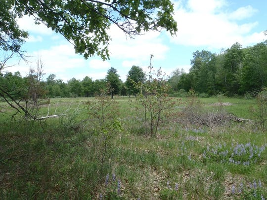 The 484-acre game area is home to about 10 patches