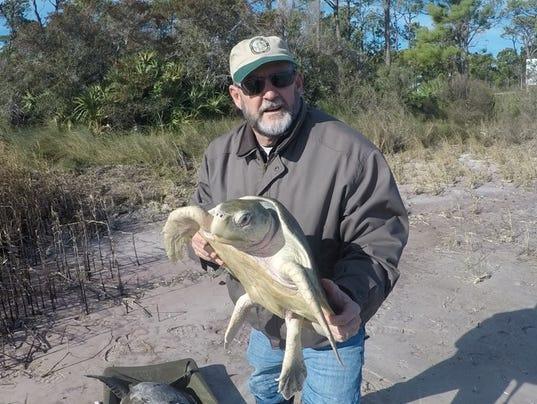 636546381019611188-kipp-with-kemps-ridley-sea-turtle-original.jpg