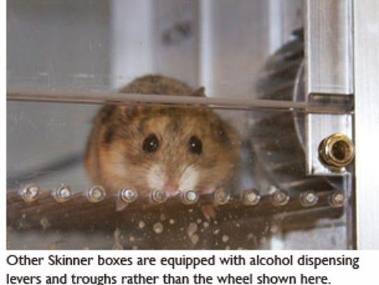 636390032875976764-20120718LJ-Hamster-close-up.jpg