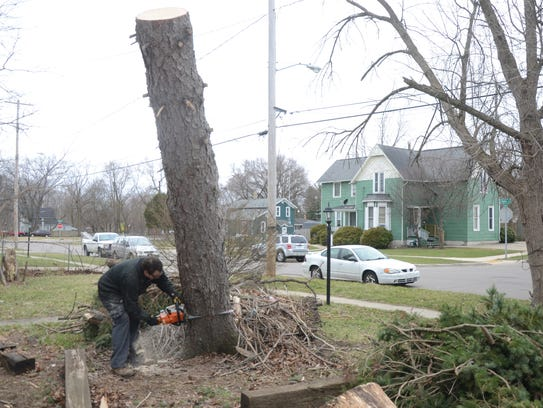 David Mettert, Jr. cuts the trunk of a pine tree which