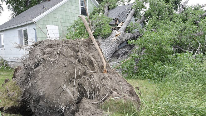 An uprooted tree rests against a home along Highway 89 in Teton County near Choteau Thursday. A severe thunderstorm uprooted trees in the Choteau area Wednesday night.