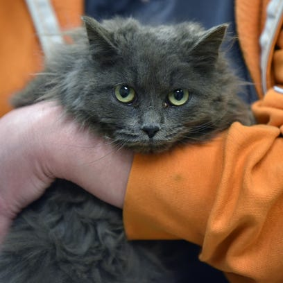 Skippy has a home at the Cumberland County SPCA in