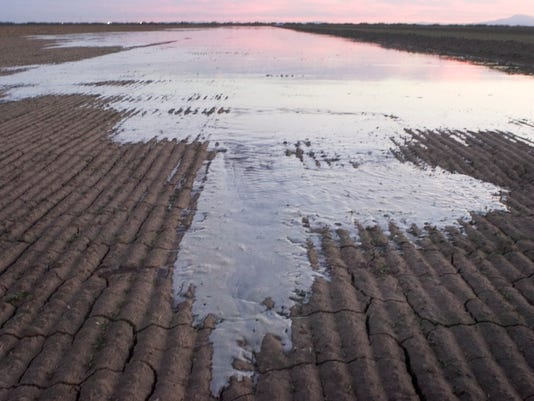 alfalfa irrigation