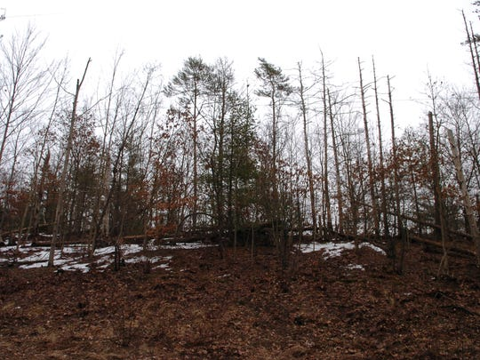 These trees sit on land owned by the city of Newark along Union Valley Road in West Milford