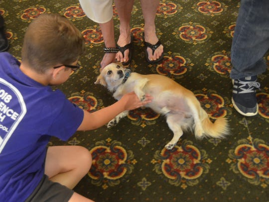 Sammy, Morningside of Gallatin's dog to comfort patients