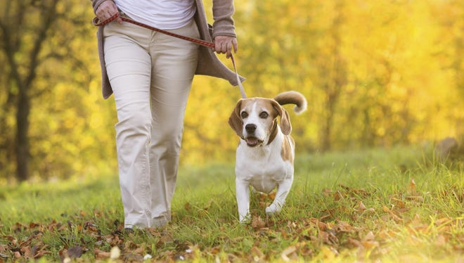 Nashville is one of the least friendly cities for dog walking, according to a Care.com study.