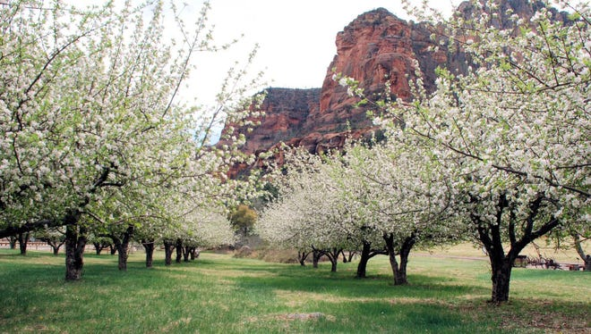 The orchards blooming in spring at Slide Rock State Park are one more enticement for an off-season visit.