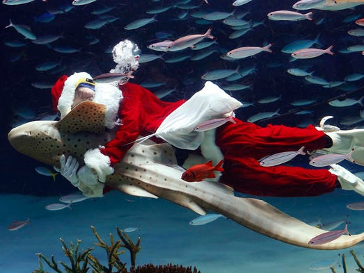 A worker dressed as Santa Claus hugs a Zebra shark at the Sunshine International Aquarium on Dec. 11 in Tokyo.