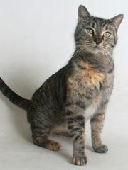 Aspen is a 3-year-old, female, black and brown female tabby domestic shorthair mix.  All feline and canine adoptions include spaying or neutering, vaccinations and a microchip. Visit Haven Humane Society, 7449 Eastside Road, Redding. Call 241-1653. Go to www.havenhumane.net.