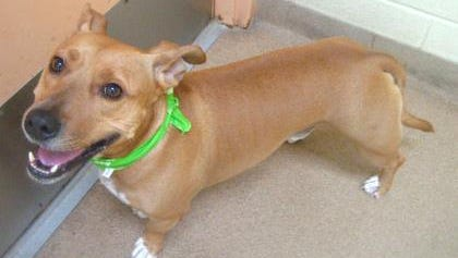 I'm short and handsome -- plus very sweet. Come meet me!