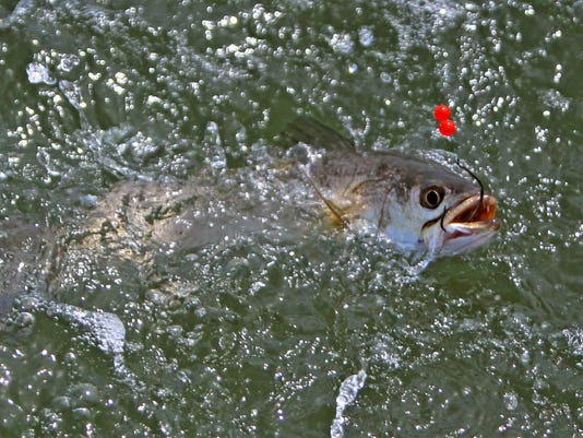 Hooked-trout.jpg