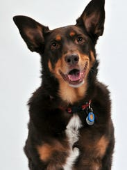 Mona is a 9-year-old mixed breed, part Australian Shepherd,