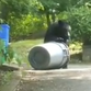 Watch: Bear rummages through garbage cans in Rockland