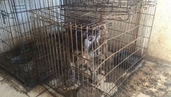 Deputies found this dog inside a Queen Creek home where