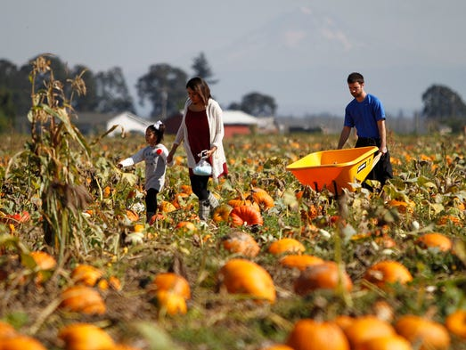 Jessica Scott, her husband, Robert, look for pumpkins at Bauman's Farm and Garden with their daughter, Evelyn, 5,  on Sunday, Sept. 28, 2014, in Gervais, Ore.
