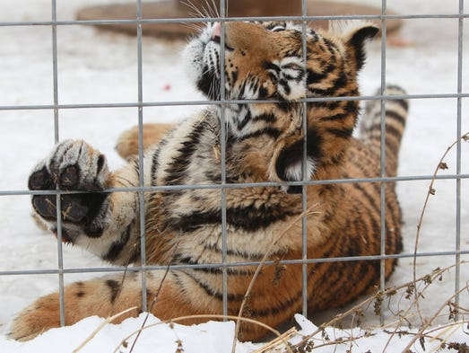 Indianapolis Big Cat Rescue