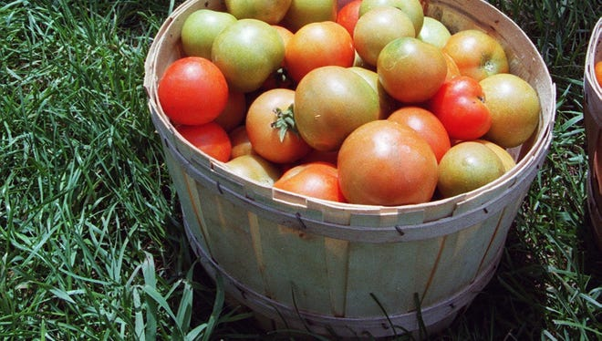 Enjoy the final tomatoes of the season, before the first frost.