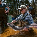 How a party in Up North woods is helping Michigan sturgeon survive