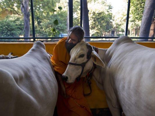India Cows and Politics