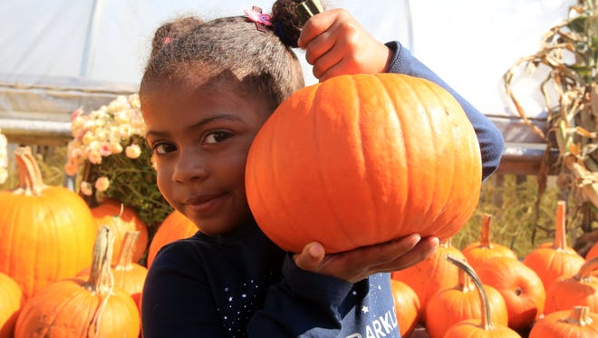 Reece Leader, then 3, holds up the pumpkin she picked out at the Orchard of Concklin in Pomona on Oct. 6, 2014.