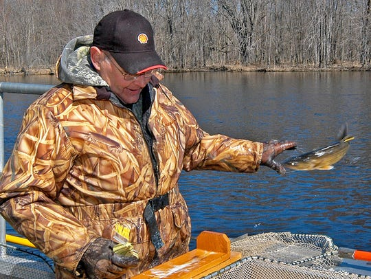 Former DNR fisheries biologist Ron Bruch tags and releases