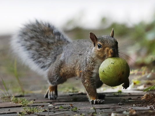Squirrels vs Farmers